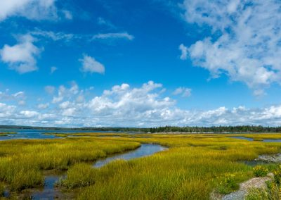 Salt Marsh Trail - Lawrencetown